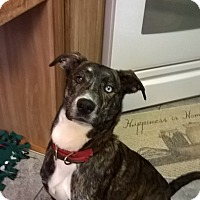 Adopt A Pet :: Shadow - New Oxford, PA