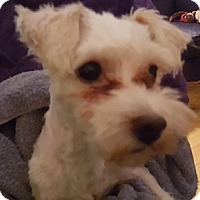 Adopt A Pet :: Jesse - Cary, NC