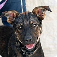 Adopt A Pet :: Amy - Palmdale, CA