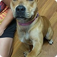 Adopt A Pet :: Merry Clara - Lisbon, OH