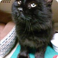 Adopt A Pet :: Israel - Franklin, NH