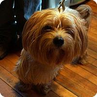 Adopt A Pet :: Harrison - Sudbury, MA