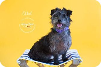 Terrier (Unknown Type, Small) Mix Dog for adoption in Visalia, California - Ethel