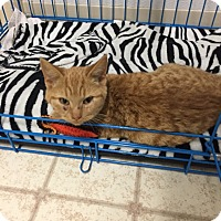 Adopt A Pet :: joseph - Bryan, OH