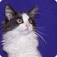 Adopt A Pet :: Thsya - Elmwood Park, NJ