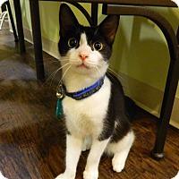 Adopt A Pet :: Go-Cart Mozart - The Colony, TX