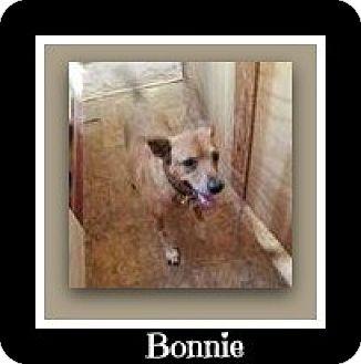Blue Heeler Mix Dog for adoption in Tombstone, Arizona - Bonnie