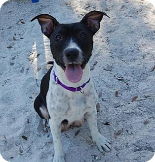 Mixed Breed (Medium) Mix Dog for adoption in Bradenton, Florida - Freedom