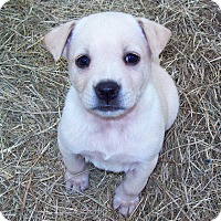 Adopt A Pet :: Lacey - Waller, TX