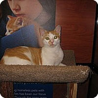 Adopt A Pet :: Olivia - Farmingdale, NY