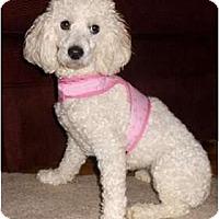 Adopt A Pet :: Abigail - Mooy, AL