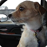 Adopt A Pet :: Jack - Glenview, IL