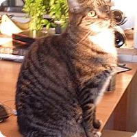Adopt A Pet :: Kaylee - Columbia, MD