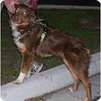 Adopt A Pet :: Franny (Fran) - Houston, TX