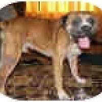 Adopt A Pet :: TUCKER - Sunderland, MA