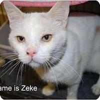 Adopt A Pet :: Zeke - Modesto, CA