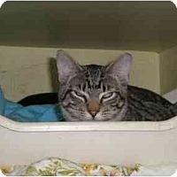 Adopt A Pet :: Bouda Boy - Lombard, IL