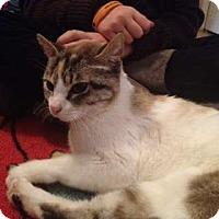 Adopt A Pet :: Fern - Greeley, CO
