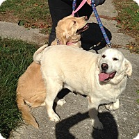 Adopt A Pet :: Bella and Behr - New Canaan, CT