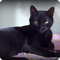 Adopt A Pet :: Sebastian - Richmond Hill, ON