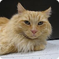 Adopt A Pet :: FLUFFY - Brea, CA