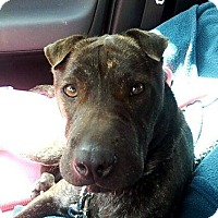 Adopt A Pet :: Georgy Girl in Florida - Mira Loma, CA