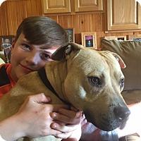Adopt A Pet :: ANDY - Mahopac, NY