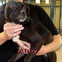 Adopt A Pet :: Abby - Coleman, TX