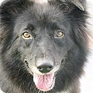 Adopt A Pet :: Milly