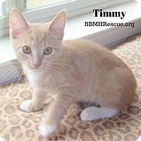 Adopt A Pet :: Timmy - Temecula, CA