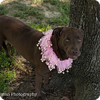 Adopt A Pet :: Mocha - Muldrow, OK
