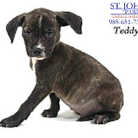 Adopt A Pet :: Teddy - Laplace, LA