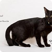 Adopt A Pet :: COAL - Westlake, CA