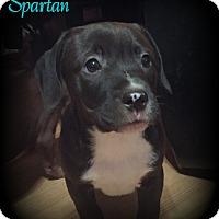 Adopt A Pet :: Spartan - Denver, NC