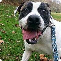 Adopt A Pet :: Violet - Shinnston, WV