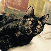 Adopt A Pet :: Patsy - Fairfax, VA