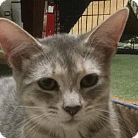 Adopt A Pet :: Quinn - Durham, NC