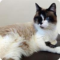 Adopt A Pet :: Pretzel - Roanoke, VA