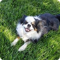 Adopt A Pet :: BeBe - House Springs, MO