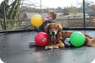 Golden Retriever Dog for adoption in Brattleboro, Vermont - Riley