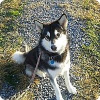 Adopt A Pet :: Jackson - Augusta County, VA