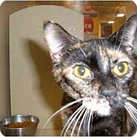 Adopt A Pet :: ROXANNE - No.Charleston, SC