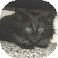 Adopt A Pet :: Mittens - Vancouver, BC