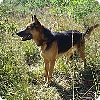 Adopt A Pet :: Opera - Redmond, WA