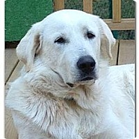 Adopt A Pet :: Iris - Villa Rica, GA