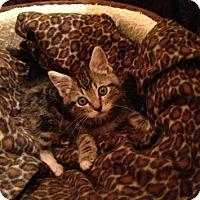 Adopt A Pet :: Emily - Pasadena, CA