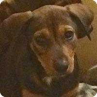 Adopt A Pet :: Mullet#2M - Orlando, FL