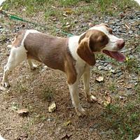 Adopt A Pet :: Addilyn - Dumfries, VA