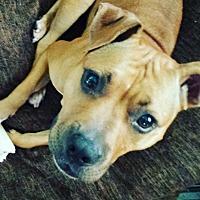 Adopt A Pet :: Amara - Lake Charles, LA