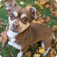 Adopt A Pet :: Chica - Drumbo, ON
